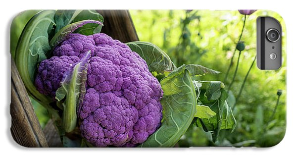 Purple Cauliflower IPhone 6 Plus Case by Aberration Films Ltd