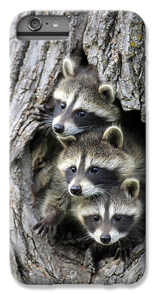 Raccoon Trio At Den Minnesota IPhone 6 Plus Case