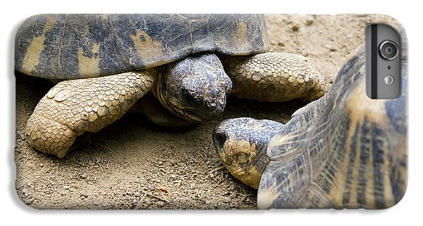 Tortoise iPhone 6 Plus Case - Radiated Tortoises by Philippe Psaila/science Photo Library