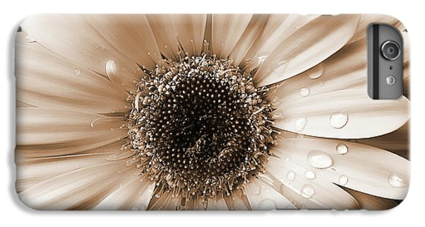 Daisy iPhone 6 Plus Case - Raindrops On Gerber Daisy Sepia by Jennie Marie Schell
