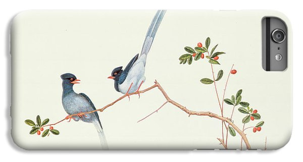 Red Billed Blue Magpies On A Branch With Red Berries IPhone 6 Plus Case by Chinese School