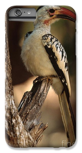 Red-billed Hornbill IPhone 6 Plus Case by Art Wolfe