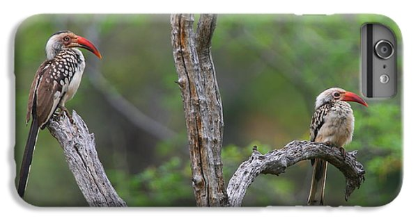 Red-billed Hornbills IPhone 6 Plus Case by Bruce J Robinson