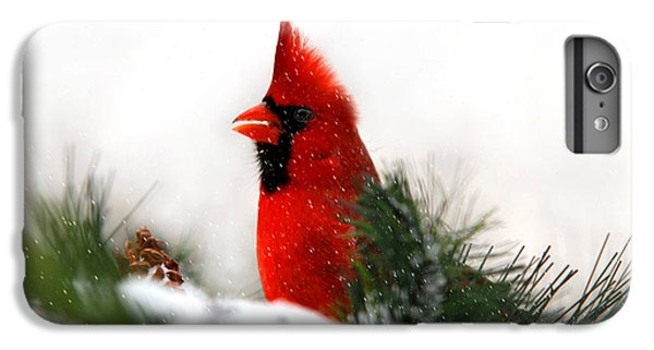 Red Cardinal IPhone 6 Plus Case