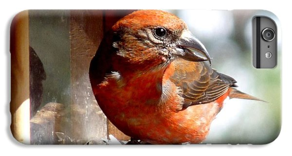 Red Crossbill IPhone 6 Plus Case by Marilyn Burton