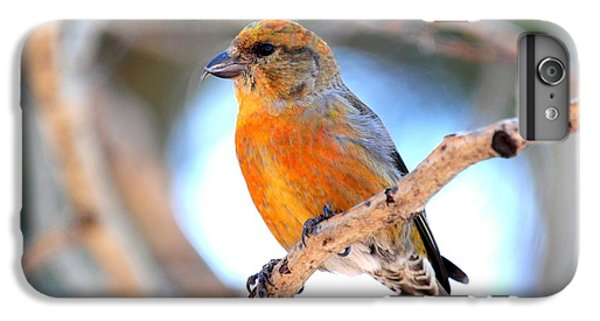Red Crossbill On Aspen IPhone 6 Plus Case by Marilyn Burton