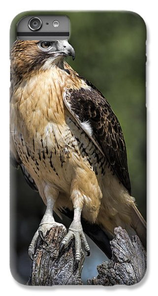 Red Tailed Hawk IPhone 6 Plus Case