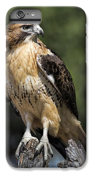 Red Tailed Hawk IPhone 6 Plus Case by Dale Kincaid