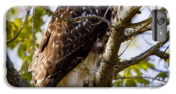 IPhone 6 Plus Case featuring the photograph Red Tailed-hawk by Ricky L Jones