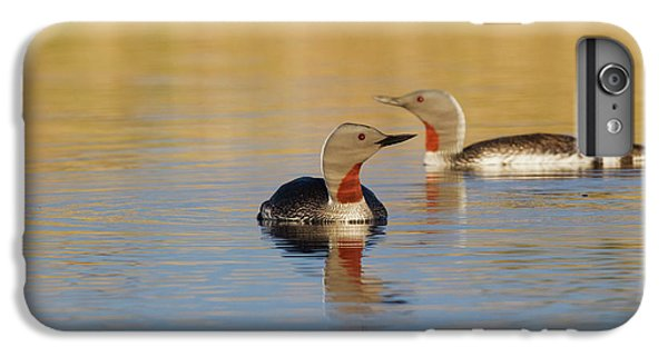 Loon iPhone 6 Plus Case - Red-throated Loon Pair by Ken Archer