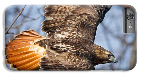 Redtail Hawk Square IPhone 6 Plus Case by Bill Wakeley