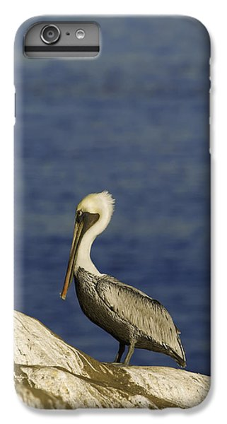 Resting Pelican IPhone 6 Plus Case by Sebastian Musial