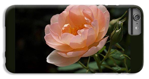 Rose Blush IPhone 6 Plus Case
