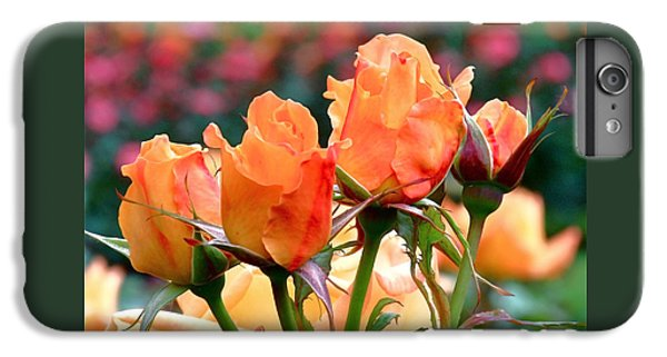 Rose Bunch IPhone 6 Plus Case by Rona Black