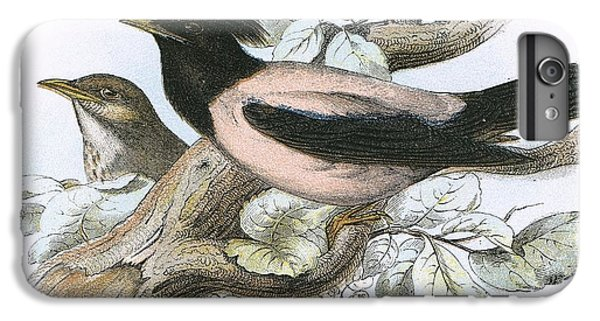 Rose Coloured Starling IPhone 6 Plus Case