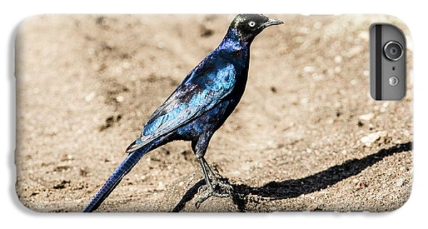 Ruppell's Glossy-starling IPhone 6 Plus Case by Photostock-israel
