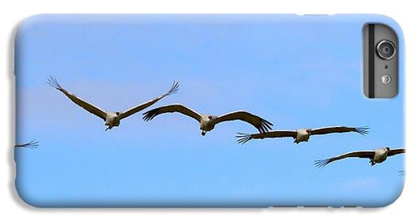 Sandhill Crane Flight Pattern IPhone 6 Plus Case by Mike Dawson