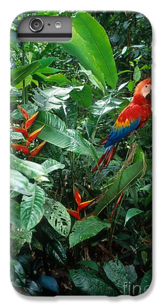 Scarlet Macaw IPhone 6 Plus Case by Art Wolfe