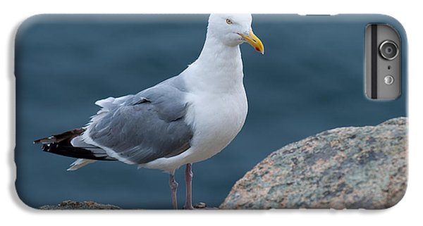 Seagull IPhone 6 Plus Case by Sebastian Musial