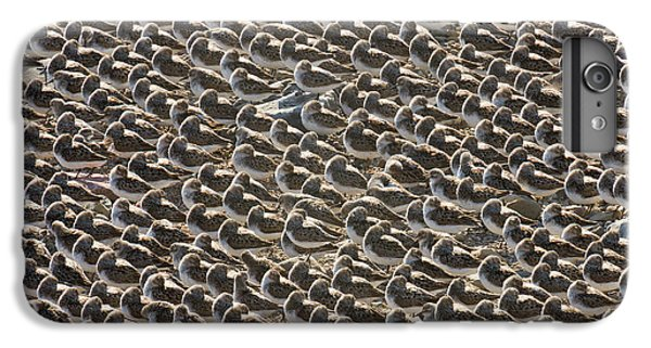 Semipalmated Sandpipers Sleeping IPhone 6 Plus Case