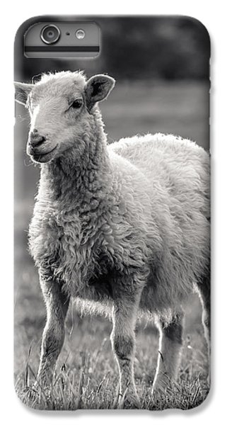 Sheep iPhone 6 Plus Case - Sheep Art  by Lucid Mood