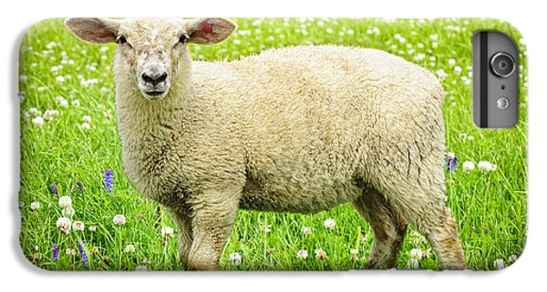 Sheep iPhone 6 Plus Case - Sheep In Summer Meadow by Elena Elisseeva