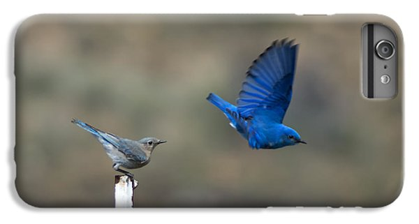 Bluebird iPhone 6 Plus Case - Showing Off by Mike  Dawson