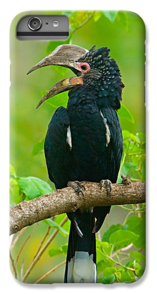 Silvery-cheeked Hornbill Perching IPhone 6 Plus Case