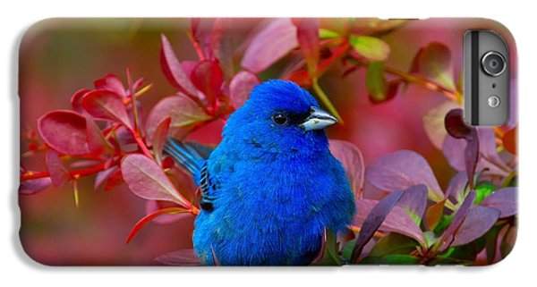 Bunting iPhone 6 Plus Case - Sitting Pretty by John Absher