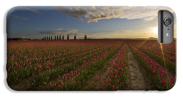 Skagit Tulip Fields Sunset IPhone 6 Plus Case by Mike Reid