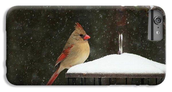 Snowy Cardinal IPhone 6 Plus Case by Benanne Stiens