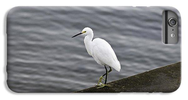 Snowy Egret IPhone 6 Plus Case by Anthony Baatz