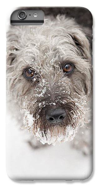 Dog iPhone 6 Plus Case - Snowy Faced Pup by Natalie Kinnear