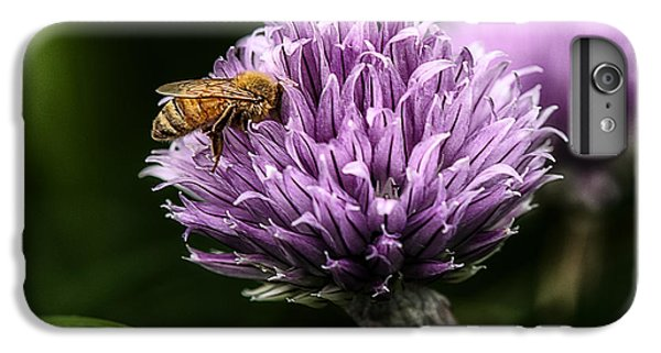 Honeybee iPhone 6 Plus Case - So Into You by Susan Capuano