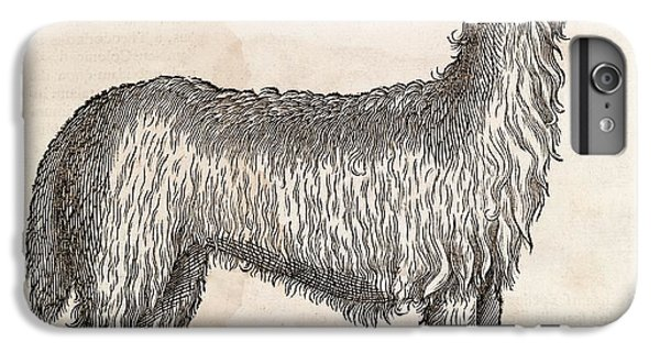 South American Camelid IPhone 6 Plus Case by Middle Temple Library