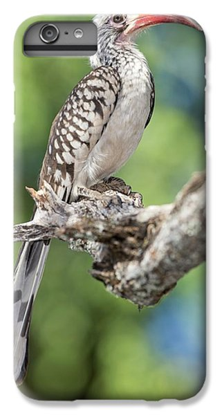 Southern Red-billed Hornbill IPhone 6 Plus Case
