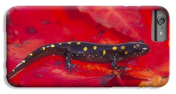 Spotted Salamander IPhone 6 Plus Case by Paul J. Fusco