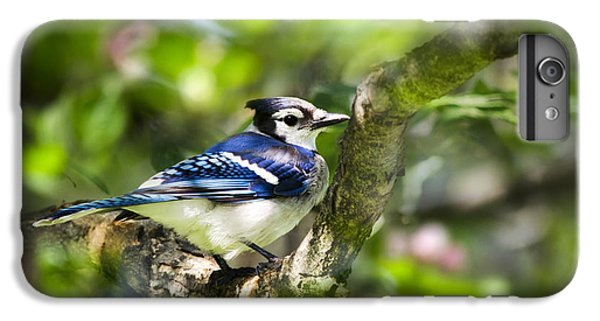 Spring Blue Jay IPhone 6 Plus Case by Christina Rollo