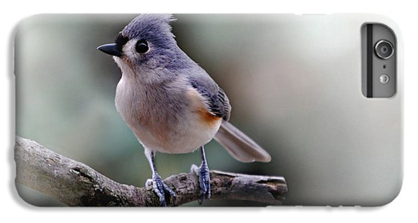 Titmouse iPhone 6 Plus Case - Spring Time Titmouse by Skip Willits