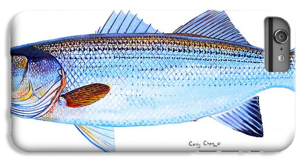 Striped Bass IPhone 6 Plus Case by Carey Chen
