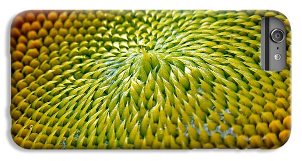 Sunflower  IPhone 6 Plus Case by Christina Rollo