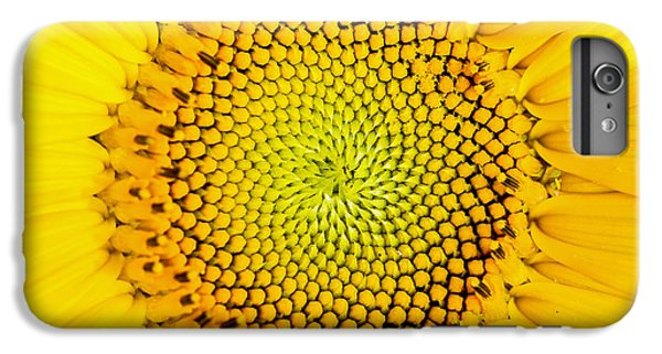 Sunflower  IPhone 6 Plus Case by Edward Fielding