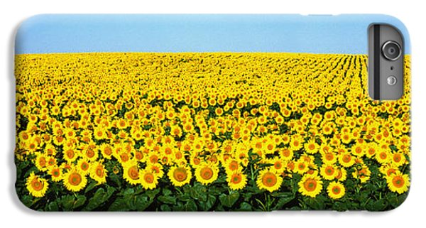 Sunflower iPhone 6 Plus Case - Sunflower Field, North Dakota, Usa by Panoramic Images