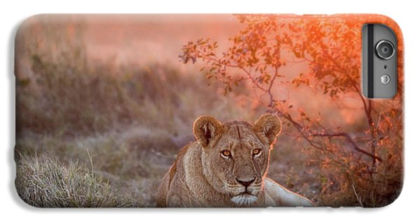 Lion iPhone 6 Plus Case - Sunset Lioness by Alessandro Catta