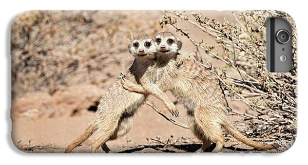 Suricates At Play IPhone 6 Plus Case by Tony Camacho