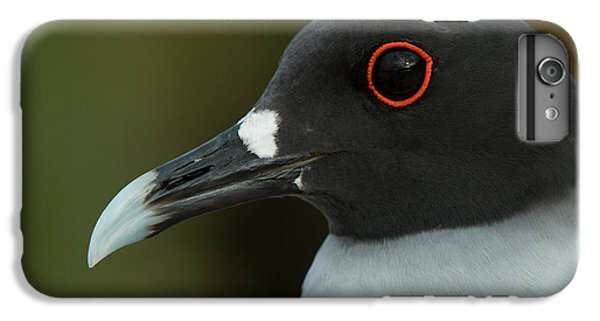 Swallow-tailed Gull (larus Furcatus IPhone 6 Plus Case by Pete Oxford
