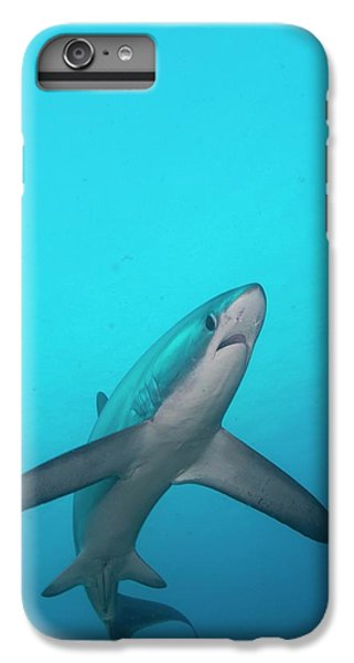 Sharks iPhone 6 Plus Case - Swimming Thresher Shark by Scubazoo