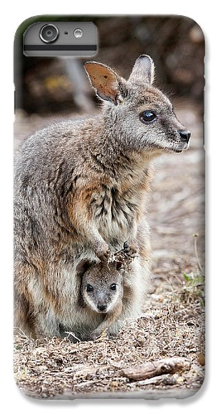 Tammar Wallaby (macropus Eugenii IPhone 6 Plus Case by Martin Zwick
