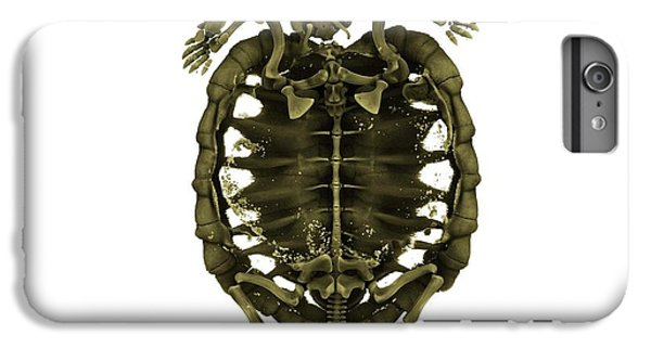 Tortoise iPhone 6 Plus Case - Tent Tortoise by Dan Sykes/natural History Museum, London