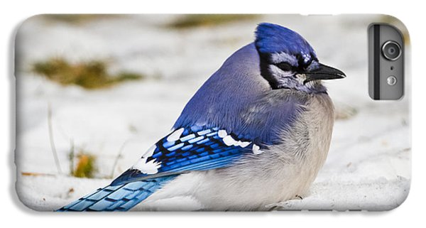 The Bluejay IPhone 6 Plus Case by Ricky L Jones